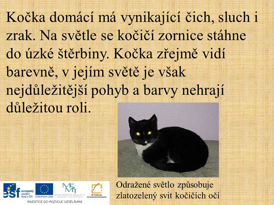 Kočka domácí má vynikající čich, sluch i zrak. Na světle se kočičí zornice stáhne do úzké štěrbiny. Kočka zřejmě vidí barevně, v jejím světě je však n