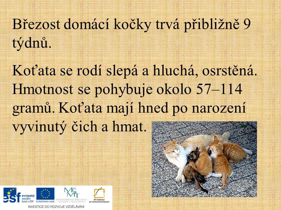 Březost domácí kočky trvá přibližně 9 týdnů. Koťata se rodí slepá a hluchá, osrstěná. Hmotnost se pohybuje okolo 57–114 gramů. Koťata mají hned po nar