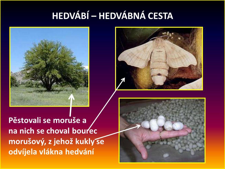 HEDVÁBÍ – HEDVÁBNÁ CESTA Pěstovali se moruše a na nich se choval bourec morušový, z jehož kukly se odvíjela vlákna hedvání