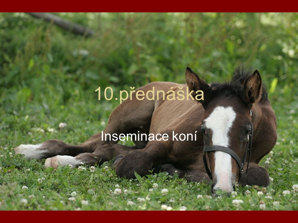 10.přednáška Inseminace koní
