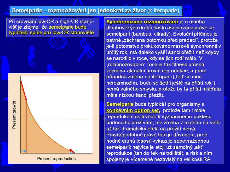 Semelparie - rozmnožování jen jedenkrát za život (x iteroparie) semelparie bude typičtější spíše pro low-CR stanoviště Při srovnání low-CR a high-CR s