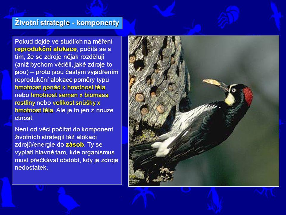 Životní strategie - komponenty reprodukční alokace hmotnost gonád x hmotnost těla hmotnost semen x biomasa rostliny velikost snůšky x hmotnost těla Po