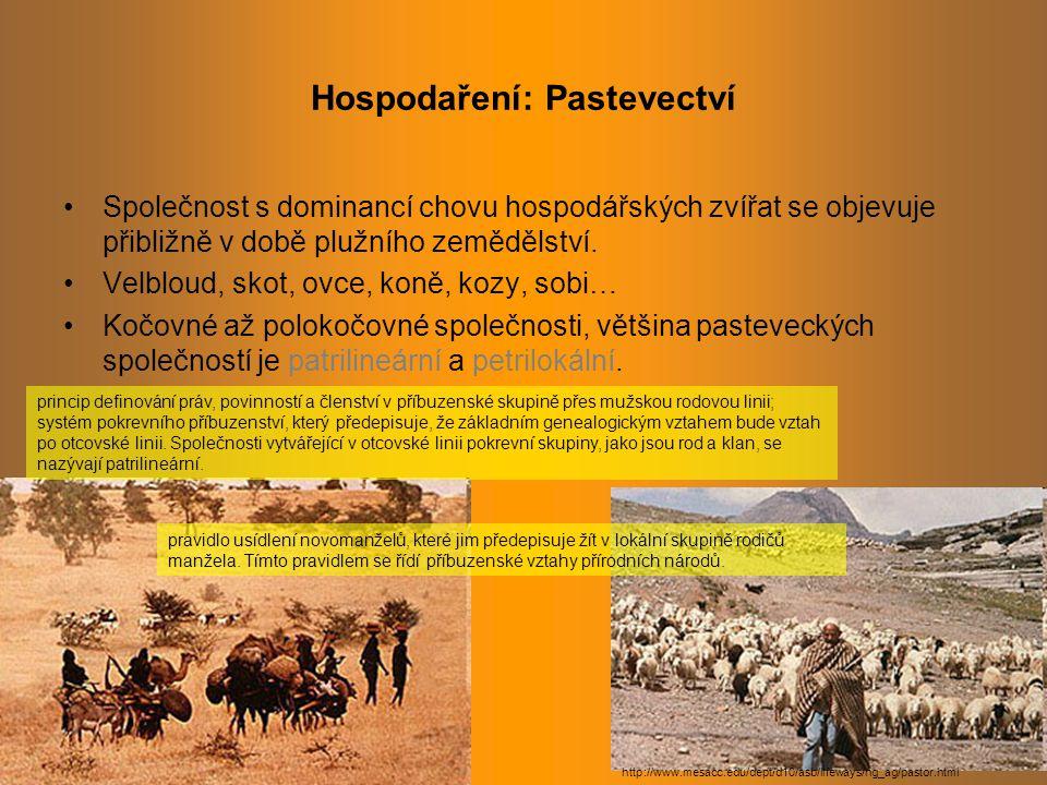 Hospodaření: Pastevectví Společnost s dominancí chovu hospodářských zvířat se objevuje přibližně v době plužního zemědělství.