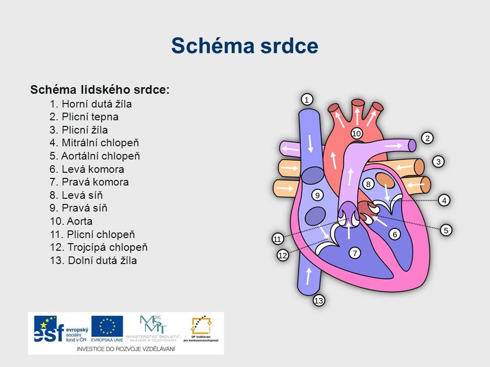 Schéma srdce Schéma lidského srdce: 1.Horní dutá žíla 2.