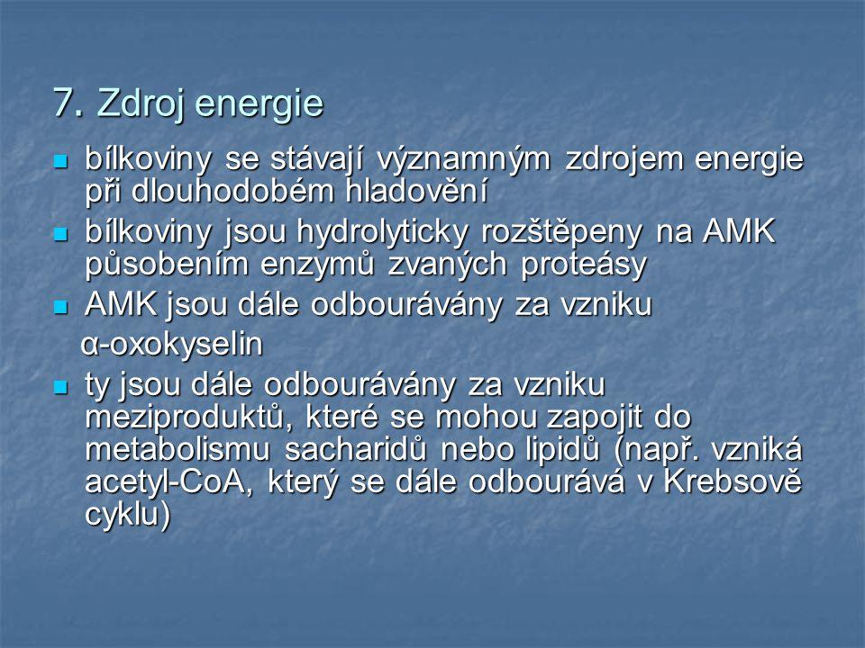 7. Zdroj energie bílkoviny se stávají významným zdrojem energie při dlouhodobém hladovění bílkoviny se stávají významným zdrojem energie při dlouhodob