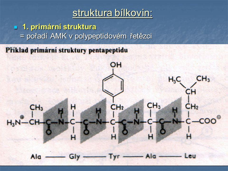 struktura bílkovin: 1. primární struktura 1. primární struktura = pořadí AMK v polypeptidovém řetězci = pořadí AMK v polypeptidovém řetězci
