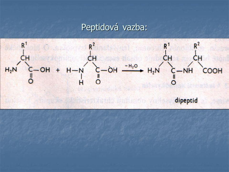 Peptidová vazba: