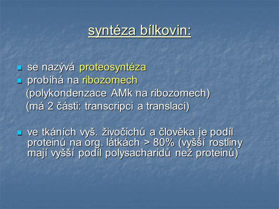 syntéza bílkovin: se nazývá proteosyntéza se nazývá proteosyntéza probíhá na ribozomech probíhá na ribozomech (polykondenzace AMk na ribozomech) (poly