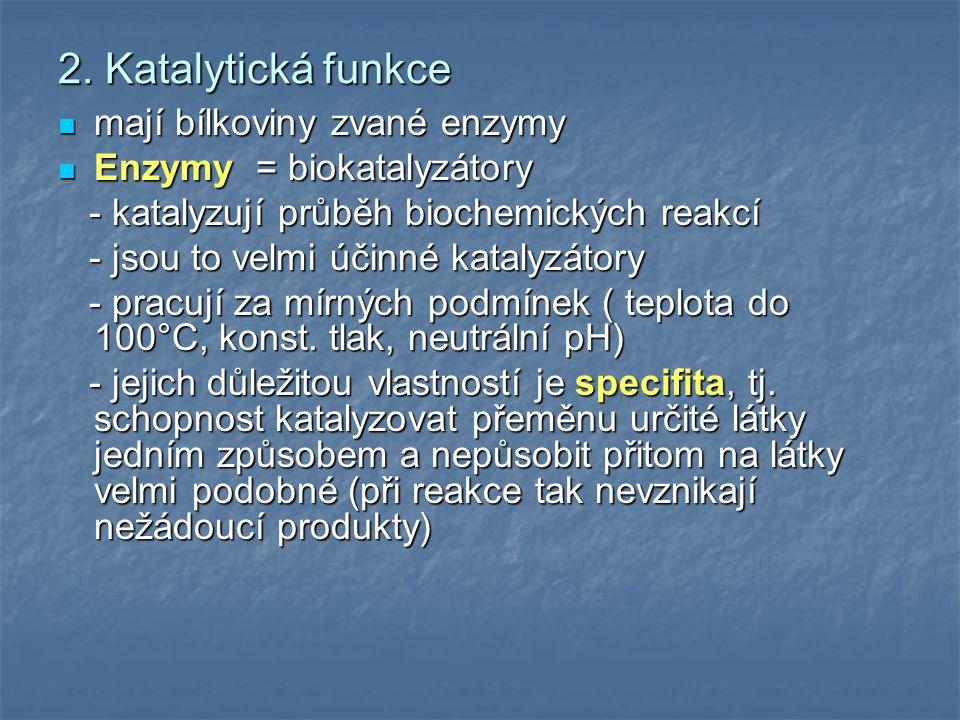 2. Katalytická funkce mají bílkoviny zvané enzymy mají bílkoviny zvané enzymy Enzymy = biokatalyzátory Enzymy = biokatalyzátory - katalyzují průběh bi