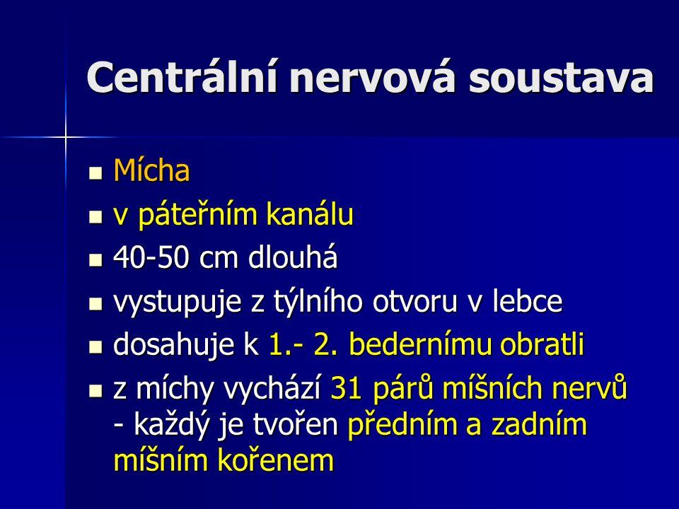 Centrální nervová soustava Mícha Mícha v páteřním kanálu v páteřním kanálu 40-50 cm dlouhá 40-50 cm dlouhá vystupuje z týlního otvoru v lebce vystupuj