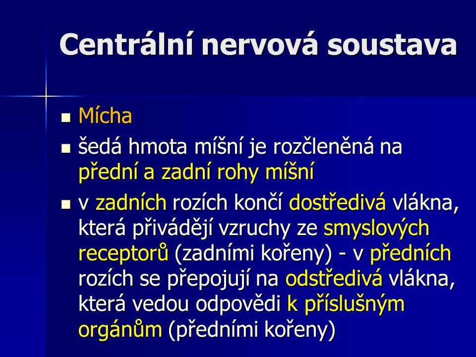 Centrální nervová soustava Mícha Mícha šedá hmota míšní je rozčleněná na přední a zadní rohy míšní šedá hmota míšní je rozčleněná na přední a zadní ro