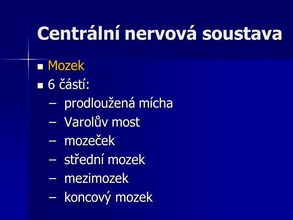 Centrální nervová soustava Mozek Mozek 6 částí: 6 částí: – prodloužená mícha – prodloužená mícha – Varolův most – Varolův most – mozeček – mozeček – s