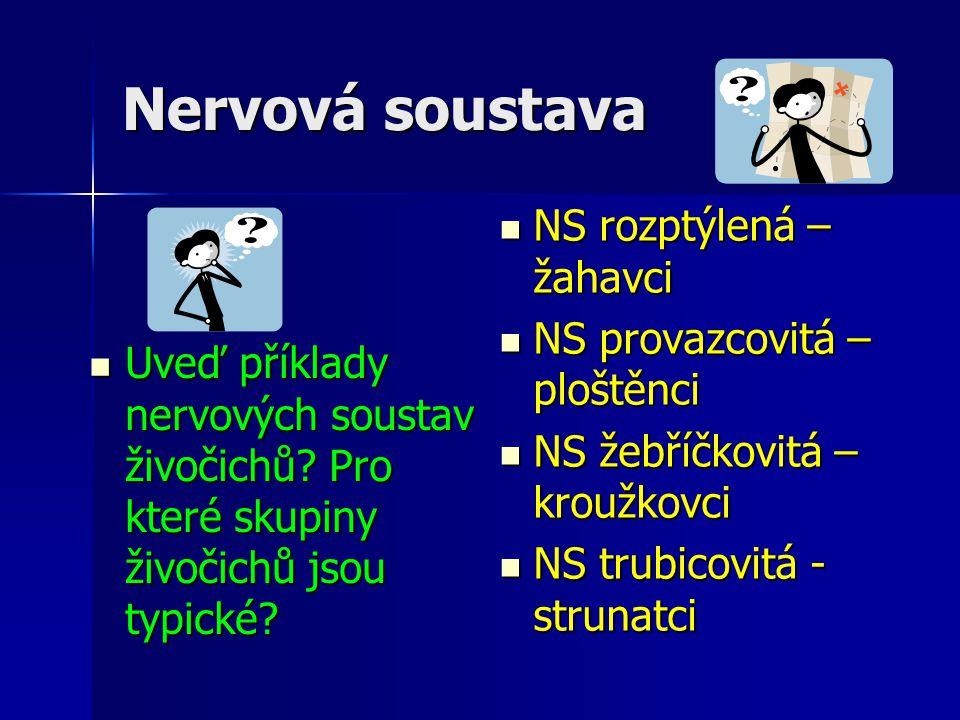 Nervová soustava Uveď příklady nervových soustav živočichů? Pro které skupiny živočichů jsou typické? Uveď příklady nervových soustav živočichů? Pro k