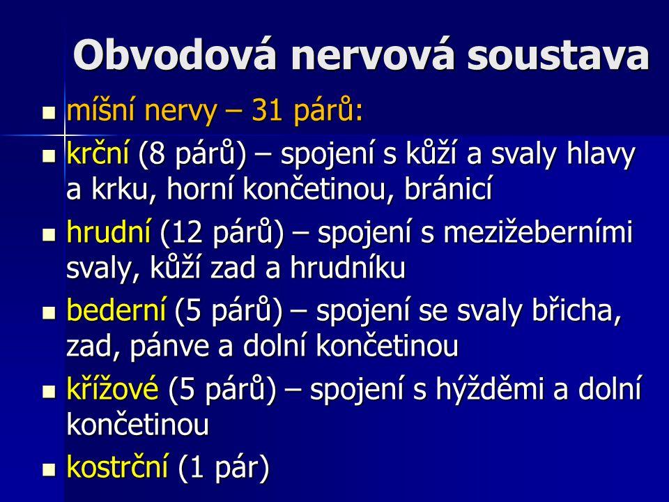 Obvodová nervová soustava míšní nervy – 31 párů: míšní nervy – 31 párů: krční (8 párů) – spojení s kůží a svaly hlavy a krku, horní končetinou, bránic
