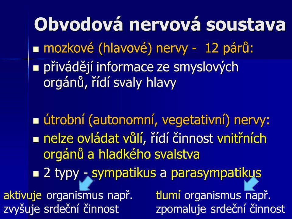 Obvodová nervová soustava mozkové (hlavové) nervy - 12 párů: mozkové (hlavové) nervy - 12 párů: přivádějí informace ze smyslových orgánů, řídí svaly h