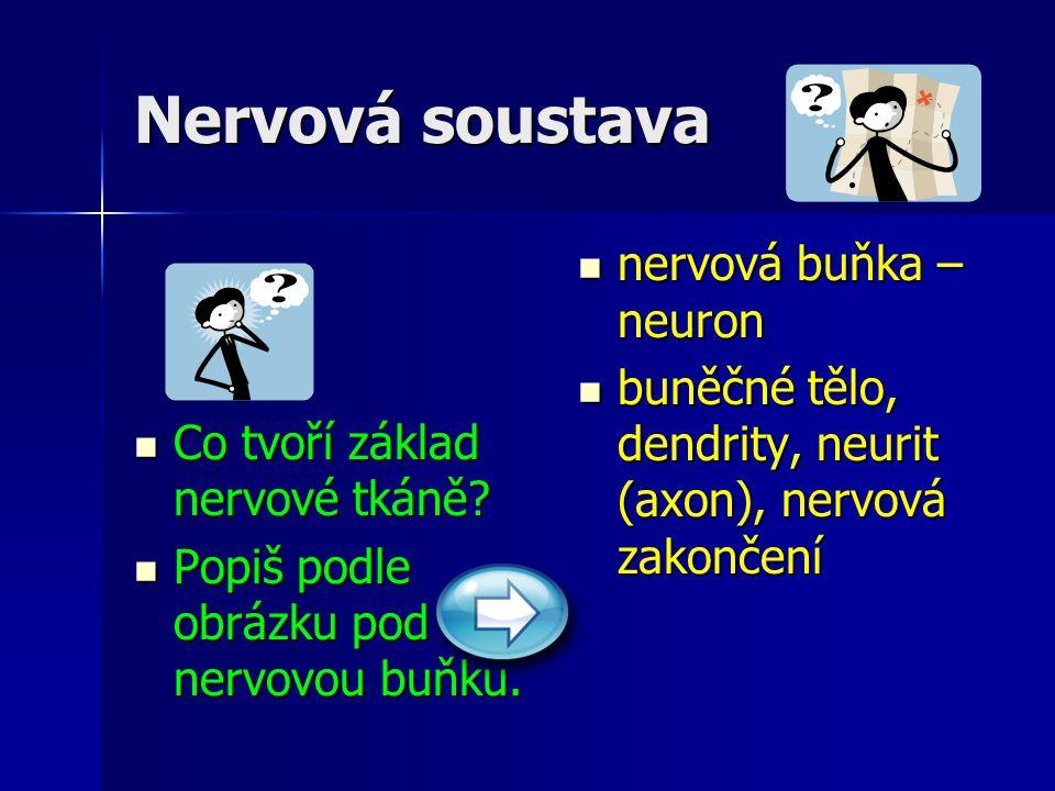 Nervová soustava Co tvoří základ nervové tkáně? Co tvoří základ nervové tkáně? Popiš podle obrázku pod nervovou buňku. Popiš podle obrázku pod nervovo