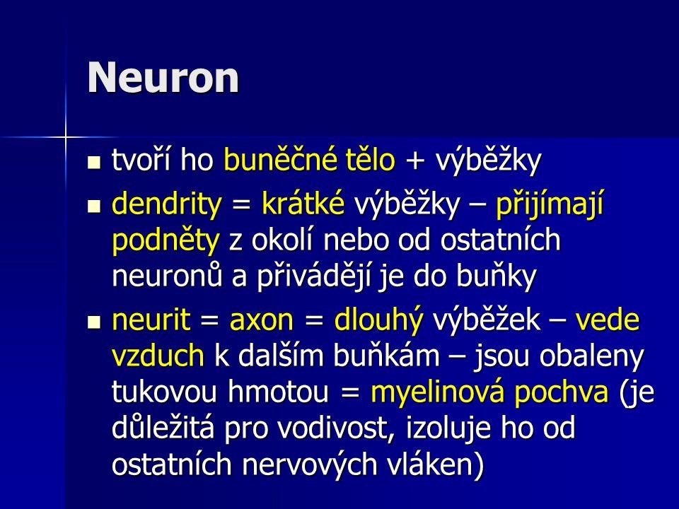 Nervový zápoj - synapse zvláštní zakončení, kterým se dotýkají jednotlivé výběžky nervových buněk zvláštní zakončení, kterým se dotýkají jednotlivé výběžky nervových buněk v synapsi se nachází nepatrná štěrbinka v synapsi se nachází nepatrná štěrbinka signál je přenášen chemickými látkami = mediátory signál je přenášen chemickými látkami = mediátory propojením neuronů vznikají nervové dráhy propojením neuronů vznikají nervové dráhy spojením neuritů nervových buněk vznikají periferní nervy spojením neuritů nervových buněk vznikají periferní nervy