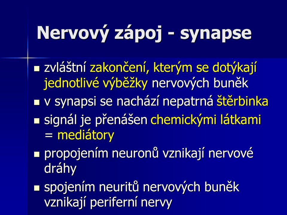 Nervový zápoj - synapse zvláštní zakončení, kterým se dotýkají jednotlivé výběžky nervových buněk zvláštní zakončení, kterým se dotýkají jednotlivé vý
