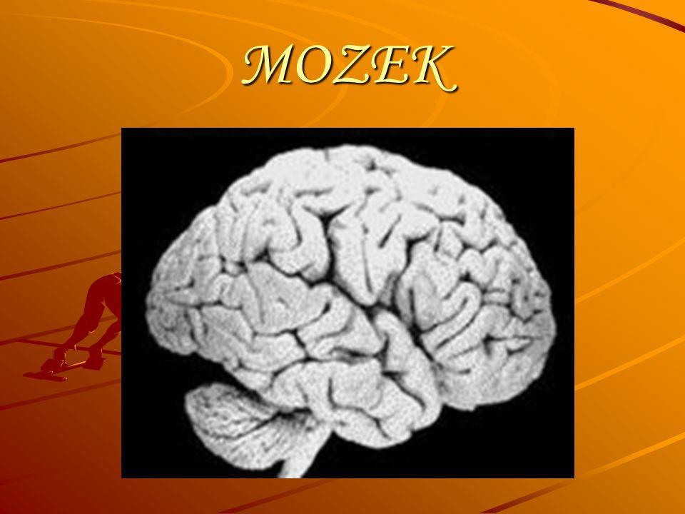 Správnost řešení Otázka č.1 zadní mozek střední mozek přední mozek Otázka č.