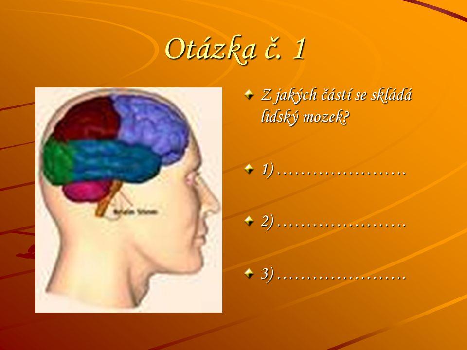 Otázka č. 1 Z jakých částí se skládá lidský mozek? 1) …………………. 2) …………………. 3) ………………….