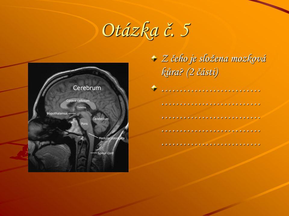 Otázka č. 5 Z čeho je složena mozková kůra? (2 části) ……………………… ……………………… ……………………… ……………………… ………………………
