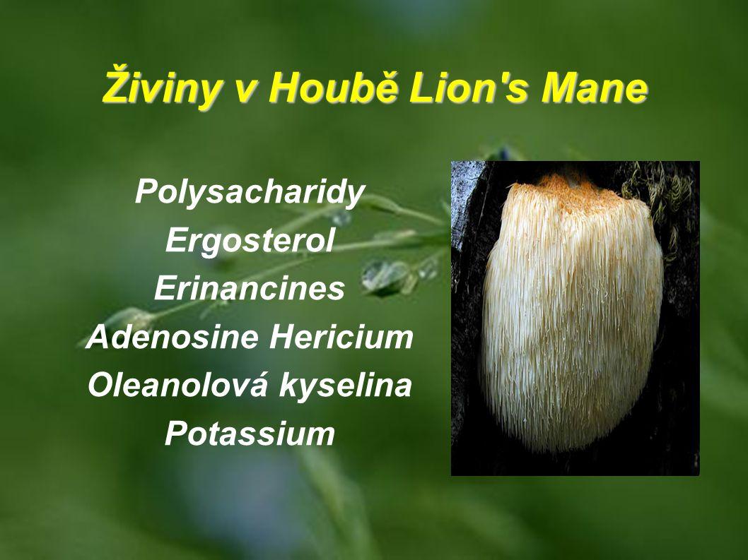 Živiny v Houbě Lion's Mane Polysacharidy Ergosterol Erinancines Adenosine Hericium Oleanolová kyselina Potassium