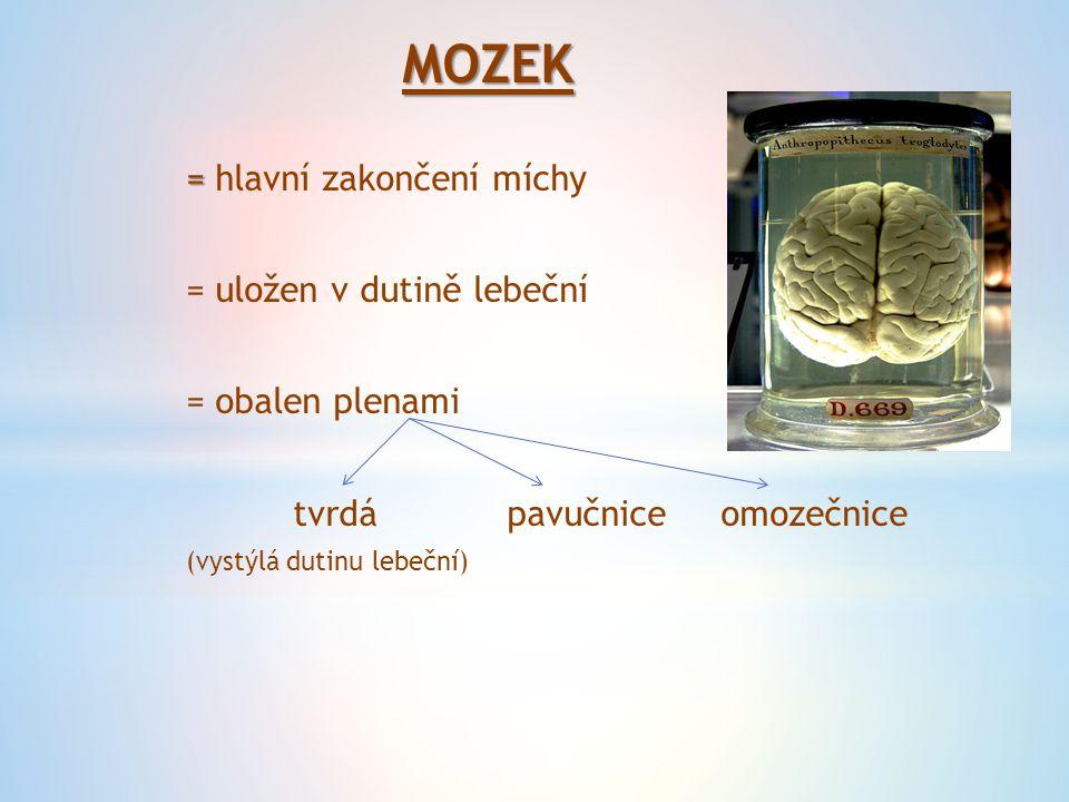 MOZEK = = hlavní zakončení míchy = uložen v dutině lebeční = obalen plenami tvrdápavučniceomozečnice (vystýlá dutinu lebeční)