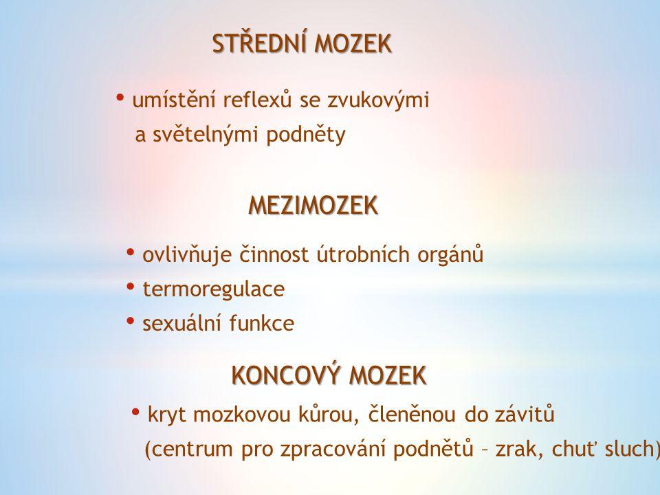 STŘEDNÍ MOZEK umístění reflexů se zvukovými a světelnými podněty MEZIMOZEK ovlivňuje činnost útrobních orgánů termoregulace sexuální funkce KONCOVÝ MO