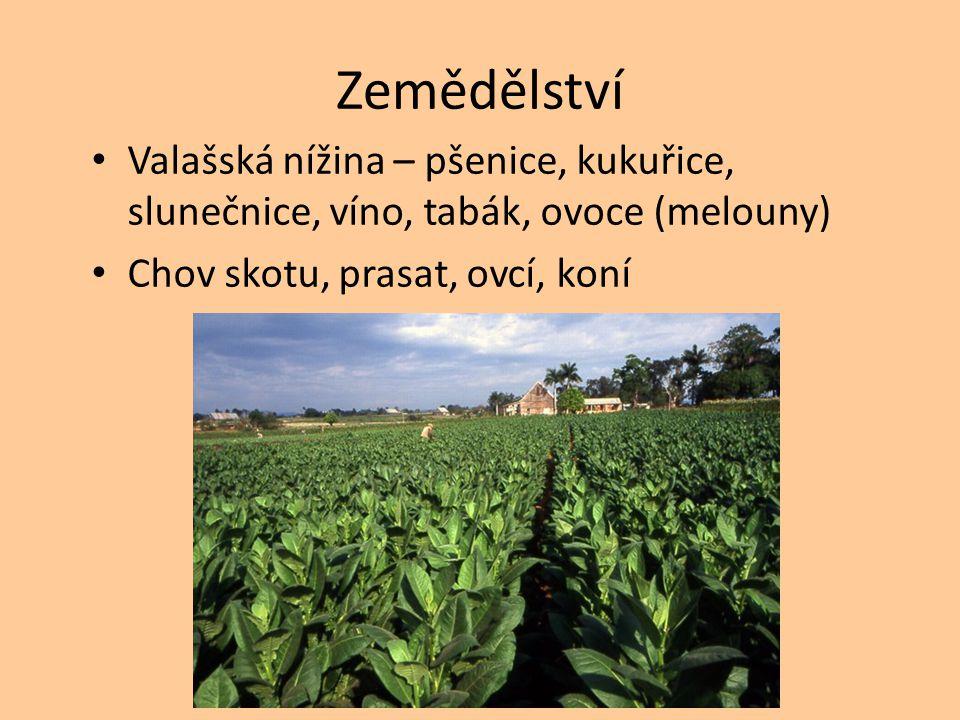 Zemědělství Valašská nížina – pšenice, kukuřice, slunečnice, víno, tabák, ovoce (melouny) Chov skotu, prasat, ovcí, koní