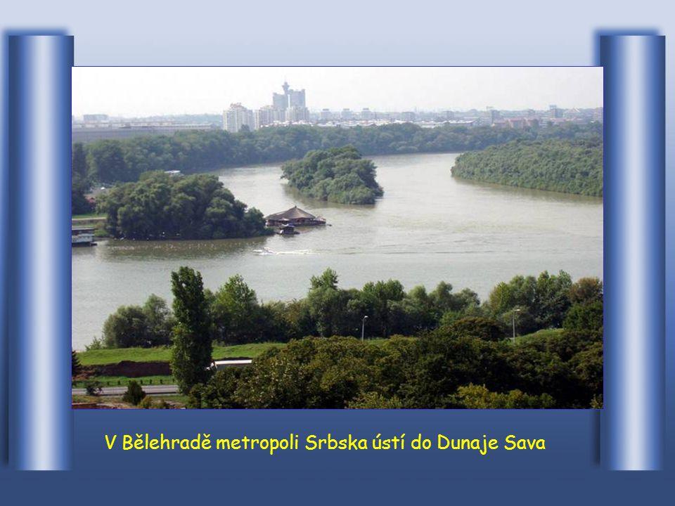 Protéká městem Novi Sad v Srbsku
