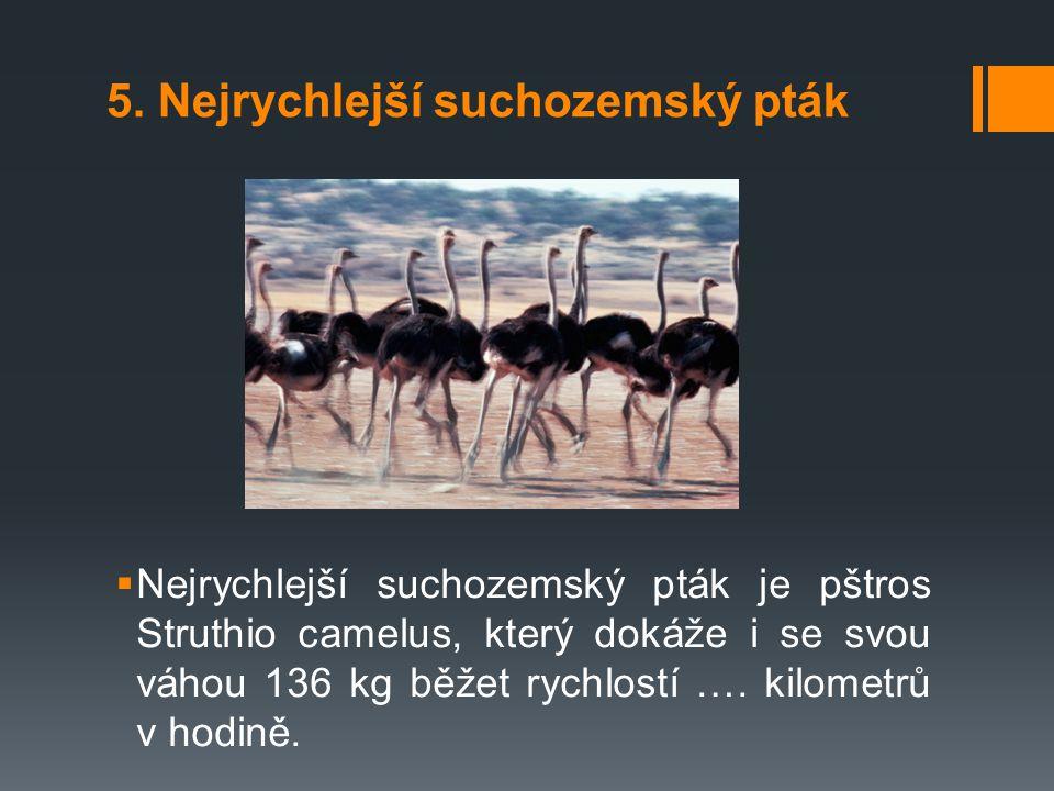 5. Nejrychlejší suchozemský pták  Nejrychlejší suchozemský pták je pštros Struthio camelus, který dokáže i se svou váhou 136 kg běžet rychlostí …. ki