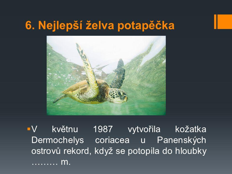 6. Nejlepší želva potapěčka  V květnu 1987 vytvořila kožatka Dermochelys coriacea u Panenských ostrovů rekord, když se potopila do hloubky ……… m.