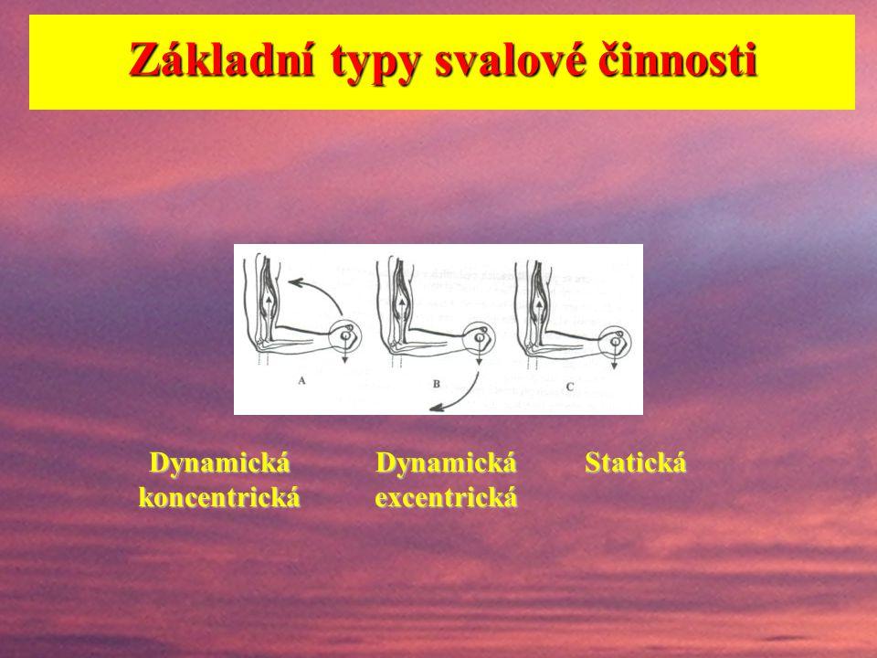 Důležité je vyjít ze znalosti typů svalové činnosti. Dva základní přístupy k členění svalové činnosti: A) a)překonávající b)udržující c)ustupující d)k