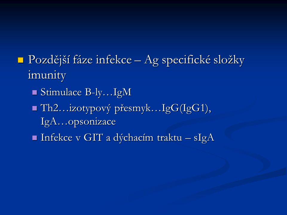 Pozdější fáze infekce – Ag specifické složky imunity Pozdější fáze infekce – Ag specifické složky imunity Stimulace B-ly…IgM Stimulace B-ly…IgM Th2…izotypový přesmyk…IgG(IgG1), IgA…opsonizace Th2…izotypový přesmyk…IgG(IgG1), IgA…opsonizace Infekce v GIT a dýchacím traktu – sIgA Infekce v GIT a dýchacím traktu – sIgA