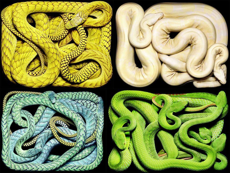 Použité zdroje http://www.volny.cz/richardhorcic/ http://www.google.cz/imgres?q=gigantic+snake+in+malaysia&um=1&hl=cs&biw=1680&bih=925&tbm=isch&tbnid=5MQ- lnn81Hp21M:&imgrefurl=http://www.foxnews.com/story/0,2933,497212,00.html&docid=wUZ64bzJeYB_7M&imgurl=http://a57.foxnew s.com/images/509228/350/450/0_21_borneo_giant_snake_1.jpg&w=350&h=450&ei=kb15UI3ABMrk4QSv74HoCA&zoom=1&iact=rc& dur=326&sig=103372242510199421059&page=1&tbnh=139&tbnw=104&start=0&ndsp=36&ved=1t:429,r:8,s:0,i:90&tx=70&ty=61 http://www.google.cz/imgres?q=gigantic+snake+in+malaysia&um=1&hl=cs&biw=1680&bih=925&tbm=isch&tbnid=5MQ- lnn81Hp21M:&imgrefurl=http://www.foxnews.com/story/0,2933,497212,00.html&docid=wUZ64bzJeYB_7M&imgurl=http://a57.foxnew s.com/images/509228/350/450/0_21_borneo_giant_snake_1.jpg&w=350&h=450&ei=kb15UI3ABMrk4QSv74HoCA&zoom=1&iact=rc& dur=326&sig=103372242510199421059&page=1&tbnh=139&tbnw=104&start=0&ndsp=36&ved=1t:429,r:8,s:0,i:90&tx=70&ty=61 http://carbon-based-ghg.blogspot.cz/2012/01/predatory-pythons-shift-everglades.html http://www.google.cz/imgres?q=gigantic+snake+in+malaysia&um=1&hl=cs&biw=1680&bih=925&tbm=isch&tbnid=DdtHHZACkZRKU M:&imgrefurl=http://missosology.info/forum/viewtopic.php%3Ff%3D1%26t%3D44322%26view%3Dunread&docid=lzC58mHQ4nWsZM &imgurl=http://i31.tinypic.com/2v3srj5.jpg&w=335&h=500&ei=kb15UI3ABMrk4QSv74HoCA&zoom=1&iact=rc&dur=327&sig=103372 242510199421059&page=2&tbnh=139&tbnw=90&start=36&ndsp=44&ved=1t:429,r:39,s:20,i:246&tx=60&ty=58 http://www.google.cz/imgres?q=gigantic+snake+in+malaysia&um=1&hl=cs&biw=1680&bih=925&tbm=isch&tbnid=DdtHHZACkZRKU M:&imgrefurl=http://missosology.info/forum/viewtopic.php%3Ff%3D1%26t%3D44322%26view%3Dunread&docid=lzC58mHQ4nWsZM &imgurl=http://i31.tinypic.com/2v3srj5.jpg&w=335&h=500&ei=kb15UI3ABMrk4QSv74HoCA&zoom=1&iact=rc&dur=327&sig=103372 242510199421059&page=2&tbnh=139&tbnw=90&start=36&ndsp=44&ved=1t:429,r:39,s:20,i:246&tx=60&ty=58 http://www.google.cz/imgres?q=gigantic+snake+in+malaysia&um=1&hl=cs&biw=1680&bih=925&tbm=isch&