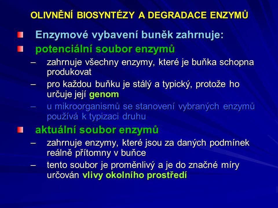 Enzymové vybavení buněk zahrnuje: potenciální soubor enzymů –zahrnuje všechny enzymy, které je buňka schopna produkovat –pro každou buňku je stálý a t