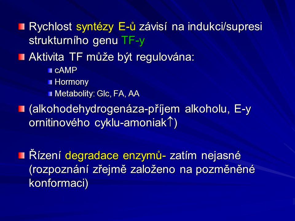 Rychlost syntézy E-ů závisí na indukci/supresi strukturního genu TF-y Aktivita TF může být regulována: cAMPHormony Metabolity: Glc, FA, AA (alkohodehy