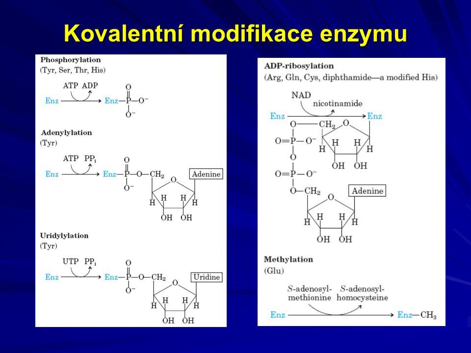 Kovalentní modifikace enzymu