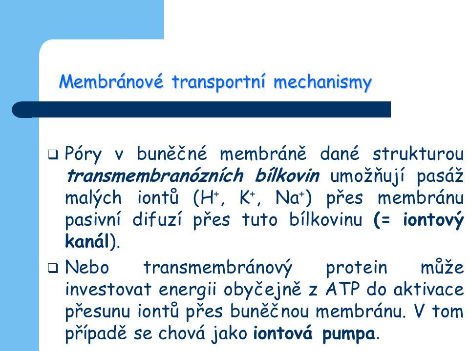 Membránové transportní mechanismy  Póry v buněčné membráně dané strukturou transmembranózních bílkovin umožňují pasáž malých iontů (H +, K +, Na + )