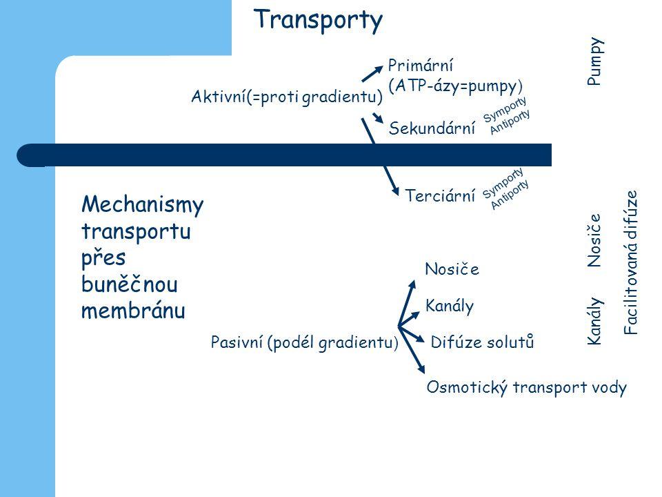 Transporty Aktivní(=proti gradientu) Pasivní (podél gradientu ) Primární (ATP-ázy=pumpy ) Sekundární Symporty Antiporty Symporty Antiporty Terciární N