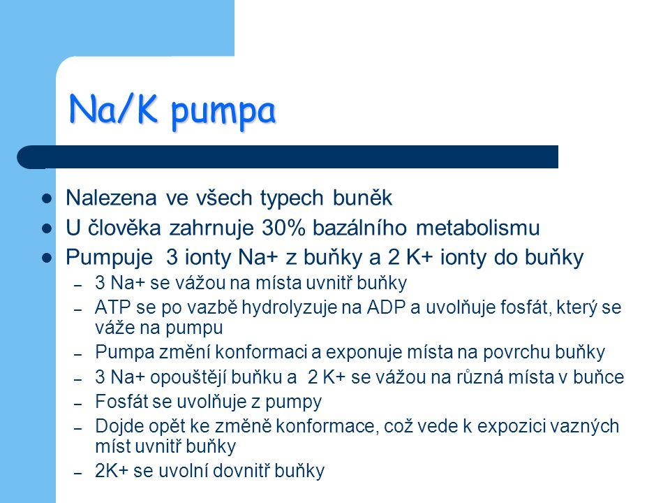 Na/K pumpa Nalezena ve všech typech buněk U člověka zahrnuje 30% bazálního metabolismu Pumpuje 3 ionty Na+ z buňky a 2 K+ ionty do buňky – 3 Na+ se vá