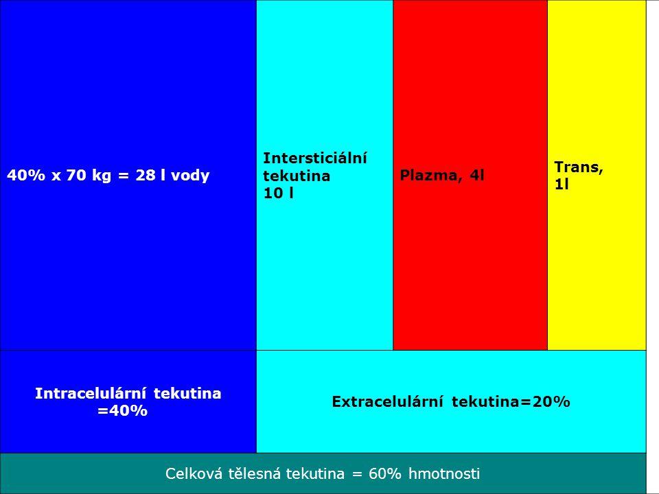 40% x 70 kg = 28 l vody Intersticiální tekutina 10 l Plazma, 4l Trans, 1l Intracelulární tekutina =40% Extracelulární tekutina=20% Celková tělesná tek