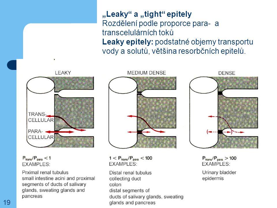 """""""Leaky"""" a """"tight"""" epitely Rozdělení podle proporce para- a transcelulárních toků Leaky epitely: podstatné objemy transportu vody a solutů, většina res"""