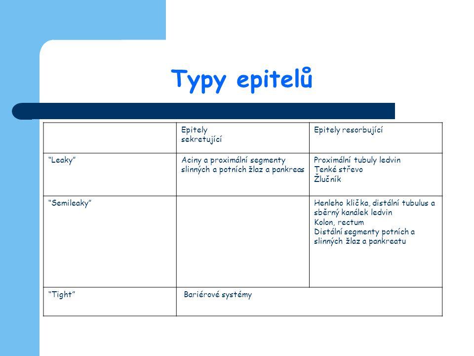 """Typy epitelů Epitely sekretující Epitely resorbující """"Leaky""""Aciny a proximální segmenty slinných a potních žlaz a pankreas Proximální tubuly ledvin Te"""