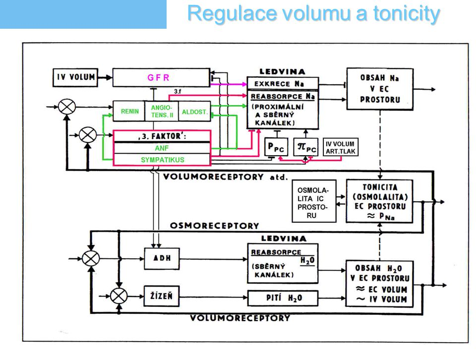 5 Regulace volumu a tonicity