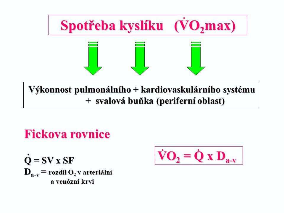Výkonnost pulmonálního + kardiovaskulárního systému + svalová buňka (periferní oblast) + svalová buňka (periferní oblast) Spotřeba kyslíku (VO 2 max)