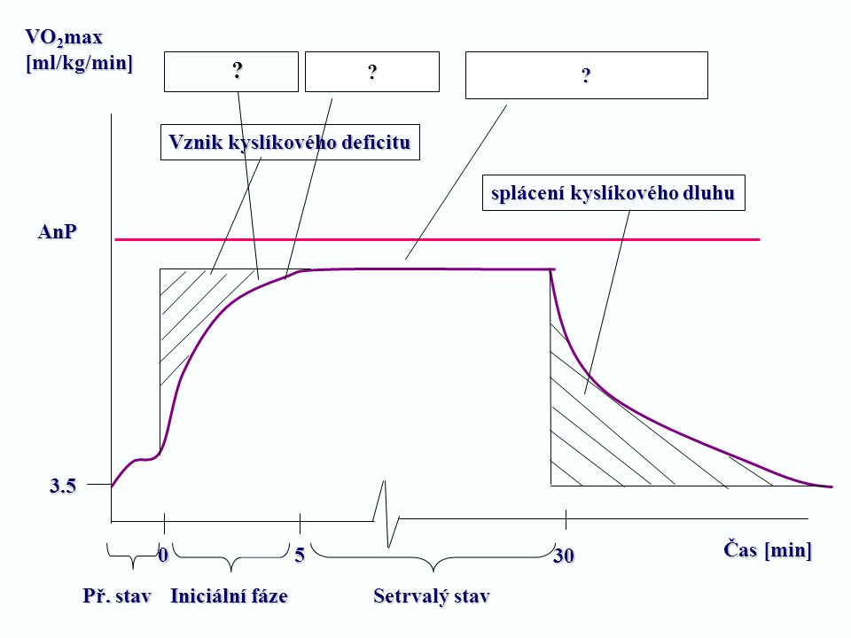 Čas [min] VO 2 max [ml/kg/min] AnP 0 5 30 3.5 Př. stav Iniciální fáze Setrvalý stav Vznik kyslíkového deficitu splácení kyslíkového dluhu ?? ?