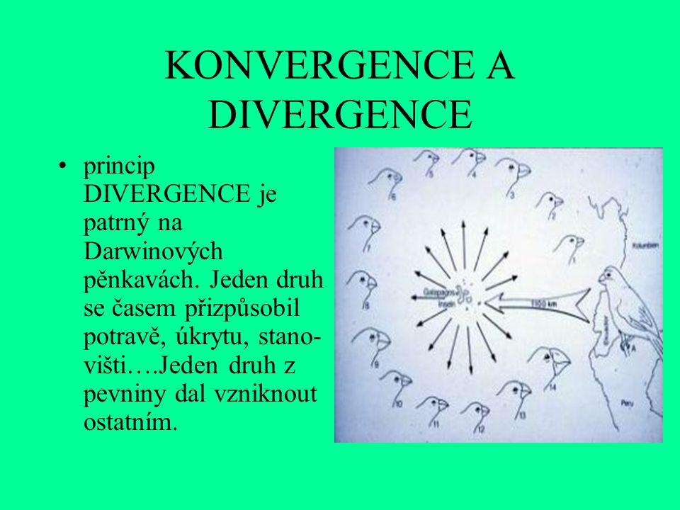 KONVERGENCE A DIVERGENCE princip DIVERGENCE je patrný na Darwinových pěnkavách.
