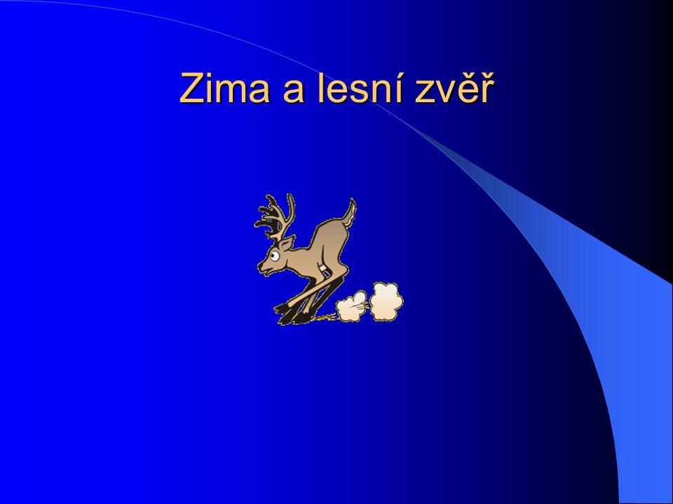 Králík divoký Ač to tak nevypadá, králík divoký není hlodavec.