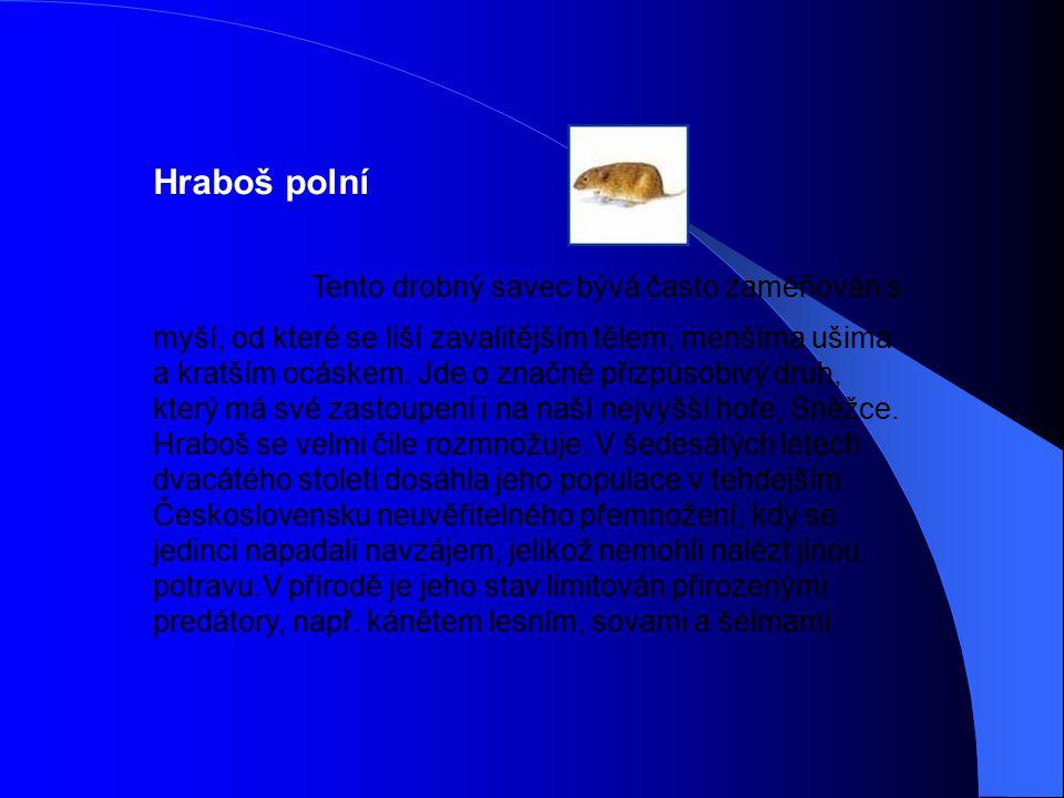 Hraboš polní Tento drobný savec bývá často zaměňován s myší, od které se liší zavalitějším tělem, menšíma ušima a kratším ocáskem. Jde o značně přizpů